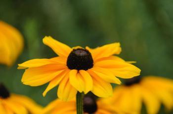 Nature's Golden Sunshine
